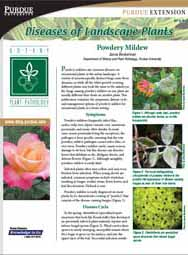Diseases of Landscape Plants: Powdery Mildew