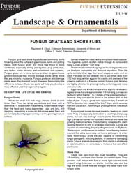 Fungus Gnats and Shore Flies
