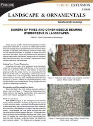 Borers of Pines and Other Needle Bearing Evergreens in Landscapes
