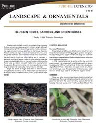Slugs in Homes, Gardens and Greenhouses