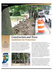 Construction and Trees: Guidelines for Protection