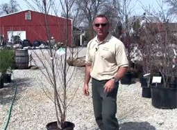 Tree Planting Part 1: Choosing a Tree