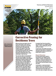 Corrective Pruning for Deciduous Trees