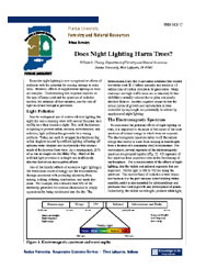 Does Night Lighting Harm Trees?