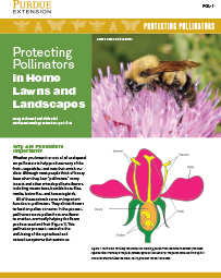 Protecting Pollinators: Protecting Pollinators in Home Lawns and Landscapes