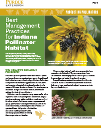 Protecting Pollinators: Best Management Practices for Indiana Pollinator Habitat