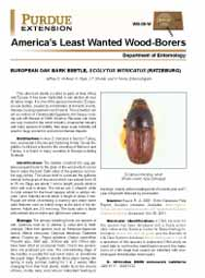 America's Least Wanted Wood-Borers: European Oak Bark Beetle, Scolytus intricatus (Ratzeburg)